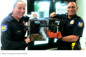 cops rescue kittens