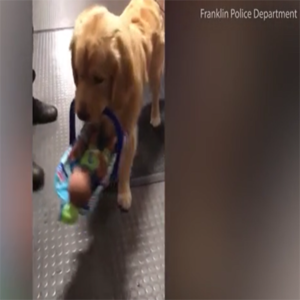 police dog steals donations